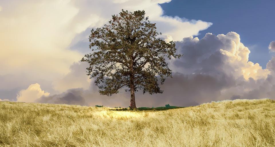 Tree, Countryside, Landscape, Nature, Sky, Grass, Sunny
