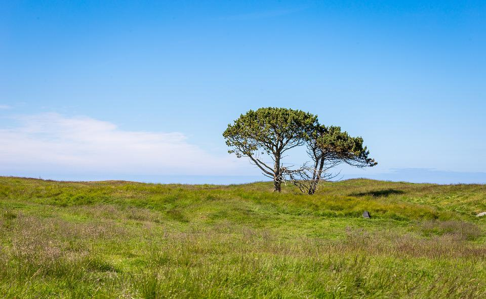 Nature, Landscape, Grass, Tree, Sky, Panoramic