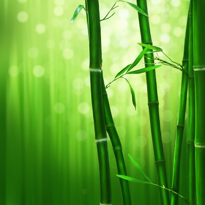 Bamboo, Green, Nature