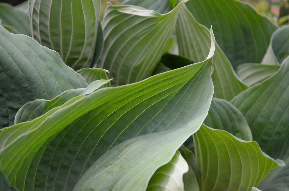 Foliage, Green, Nature, Leaf, Ecology