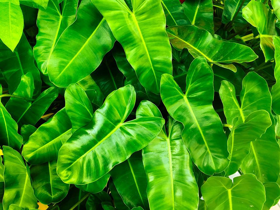 Nature, Leaves, Plant, Fresh, Green, Environmental