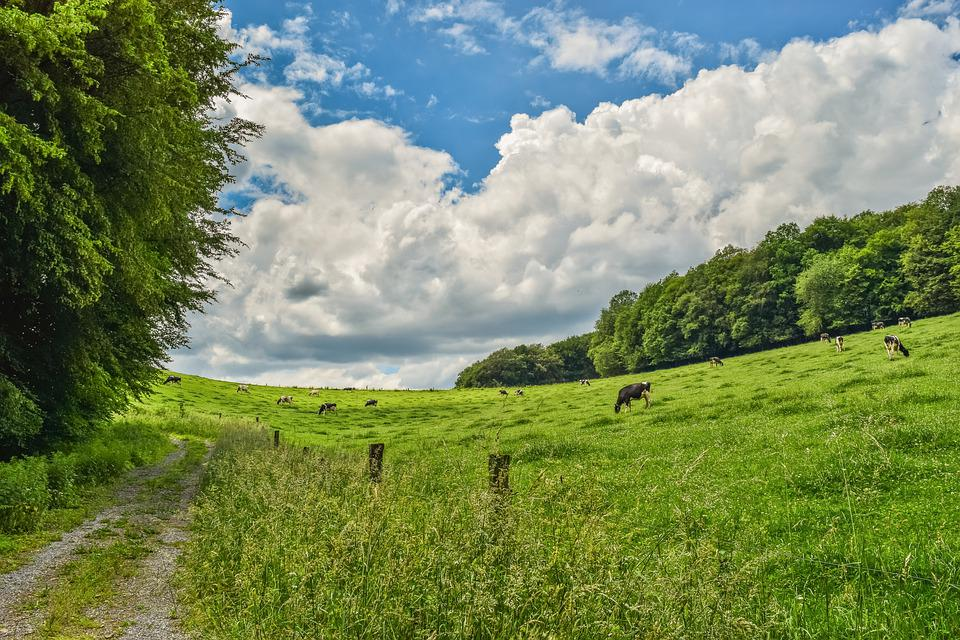 Landscape, Nature, Clouds, Forest, Sky, Scenic, Green