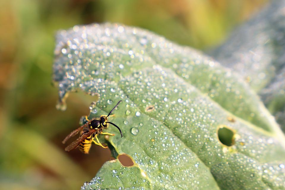 Wasp, Green Leaf, Water Drops, Autumn, Nature, Outdoor