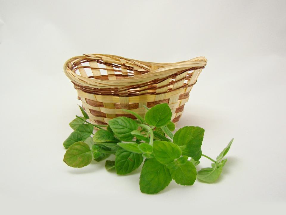 Basket, Green, Nature, Summer, Leaves, Mint, Wicker