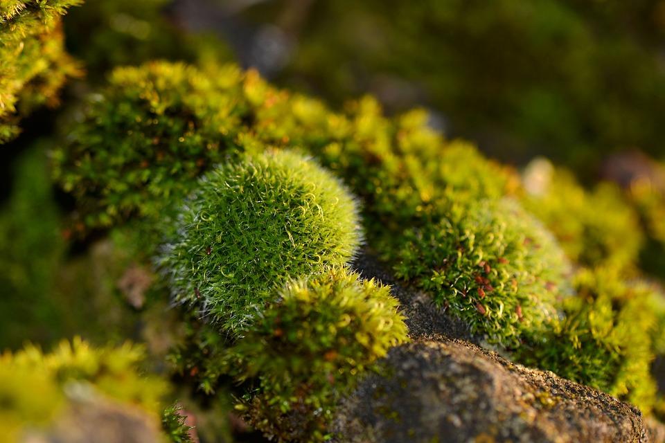 Foam, Nature, Forest, Macro, Green
