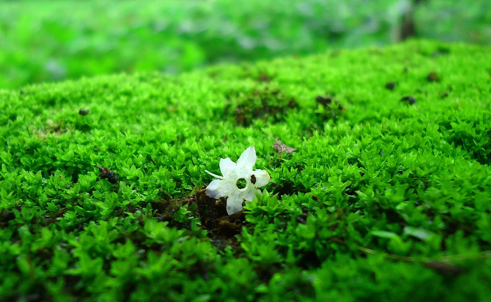 Moss, Grass, Green, Garden, White, Flower, Nature