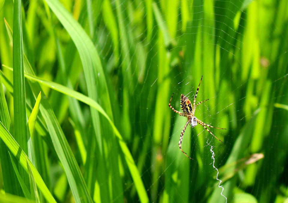 Spider, Natural, Green, Nature