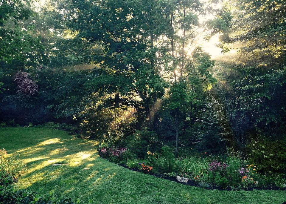 Garden, Sunlight, Dawn, Nature, Green, Summer, Light