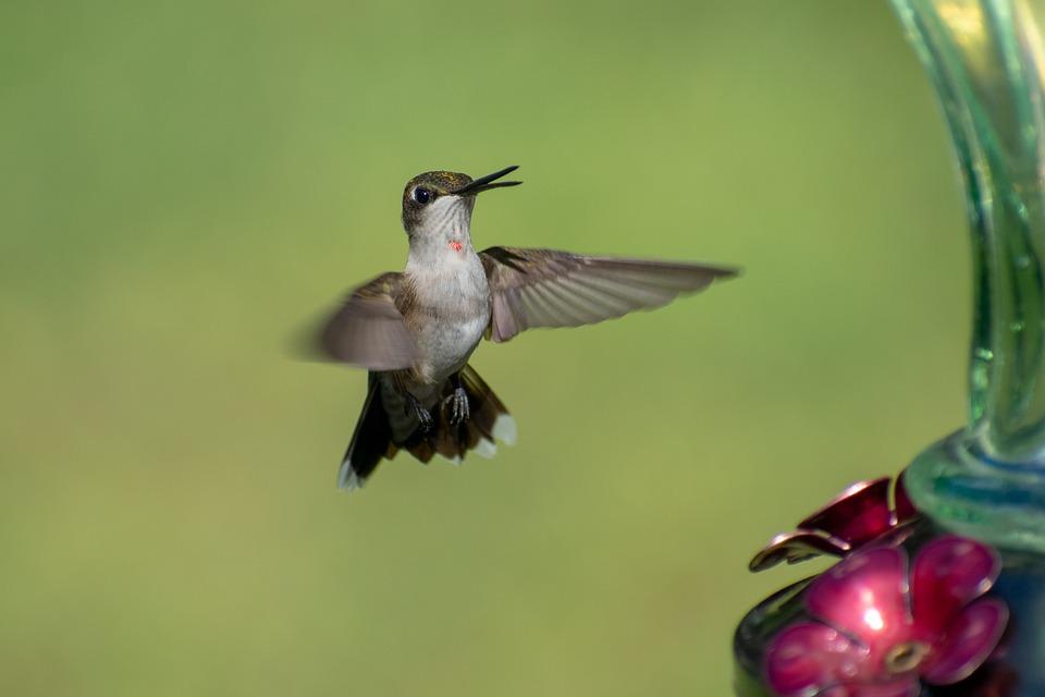 Bird, Nature, Hummingbird, Green, Wildlife, Wing, Small