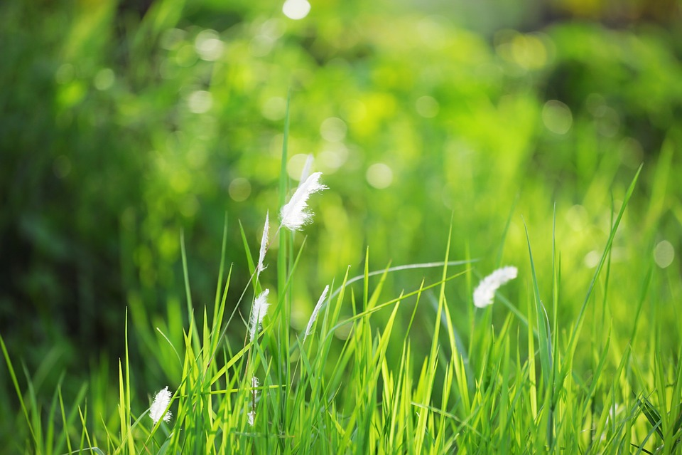 Grass, Hayfield, Nature, Lawn, Summer, Growth