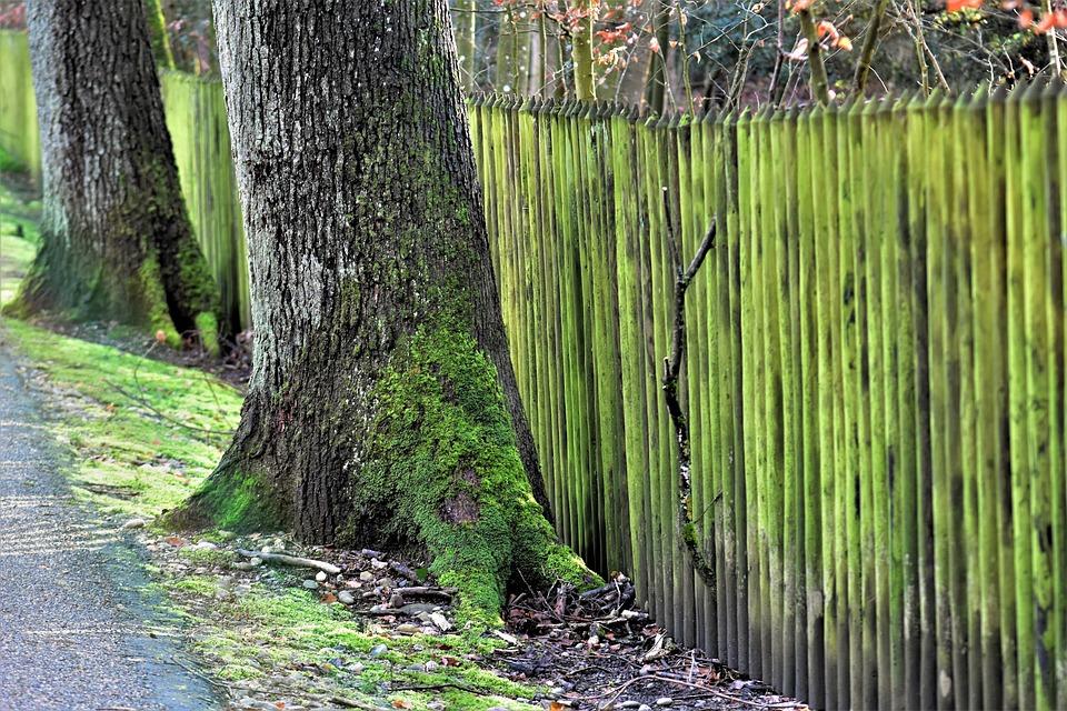 Wood, Nature, Leaf, Plant, Growth, Green, Moss