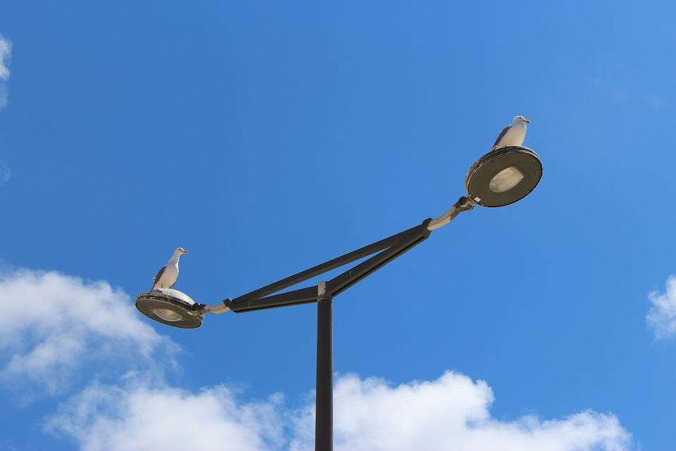 Seagulls, Birds, Lamp, Nature, Wildlife, Summer, Gulls
