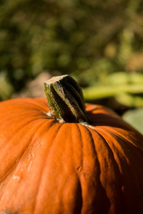 Pumpkin, Nature, Fall, Vegetables, Harvest, Halloween