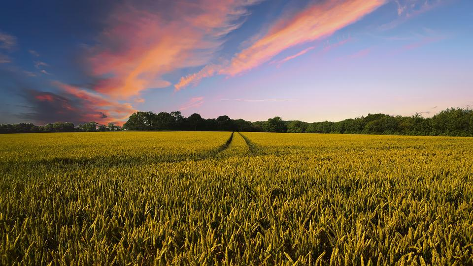 Countryside, Harvest, Agriculture, Farm, Nature, Field