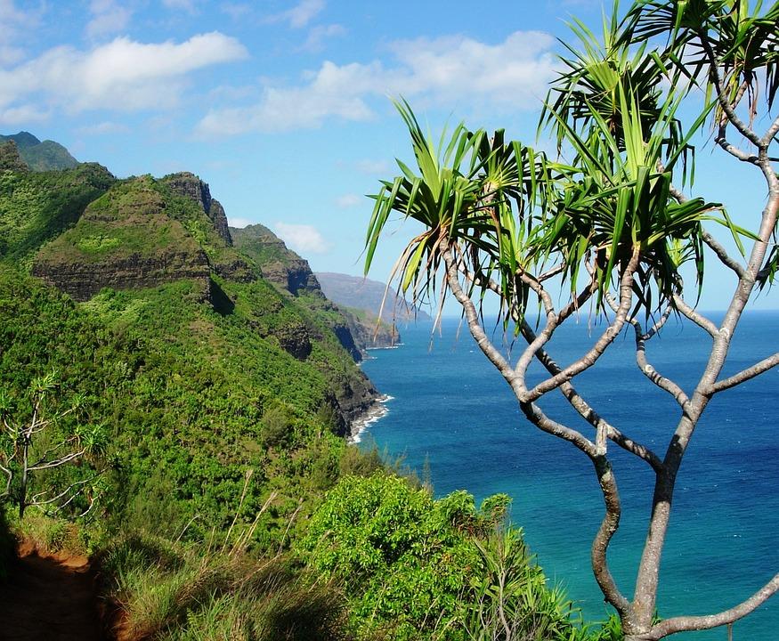 Hawaii, Tree, Tropical, Island, Nature, Travel, Palm