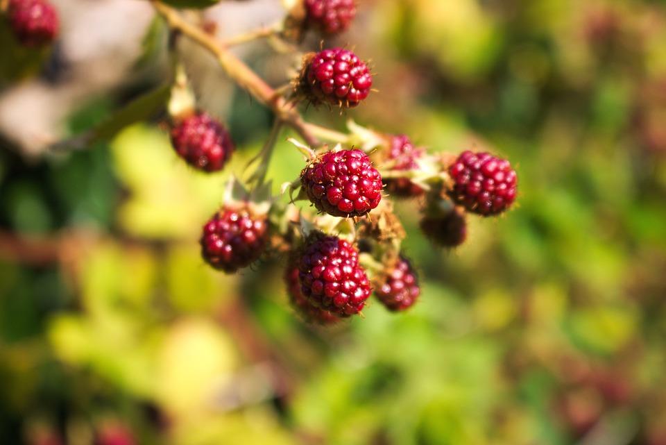 Raspberries, Berries, Fruit, Food, Nature, Healthy
