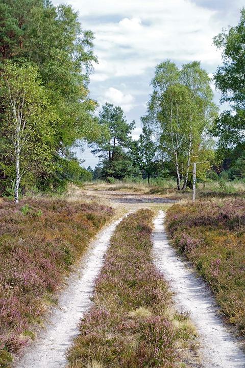 Heide, Trail, Nature, Heathland, Hiking, Heather