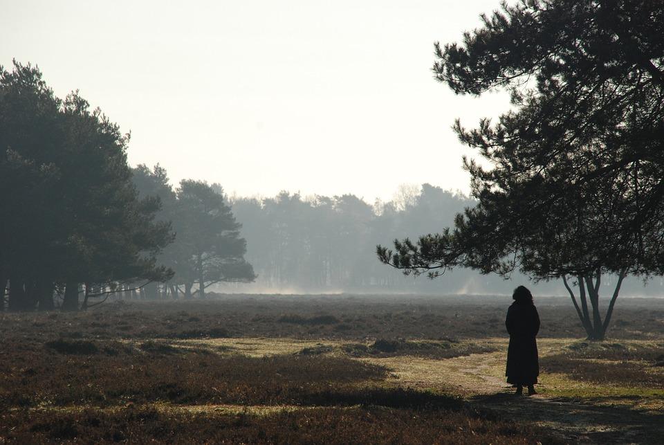 Nature, Landscape, Forest, Heide, Hiking, Trees