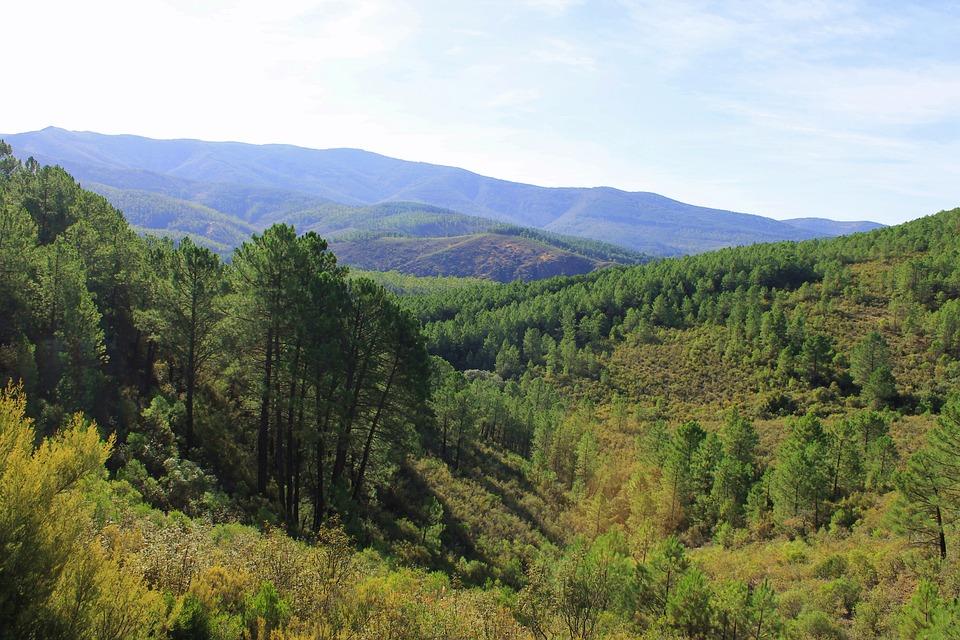 Landscape, Nature, Mountain, Pine, Cáceres, Hills, Tree