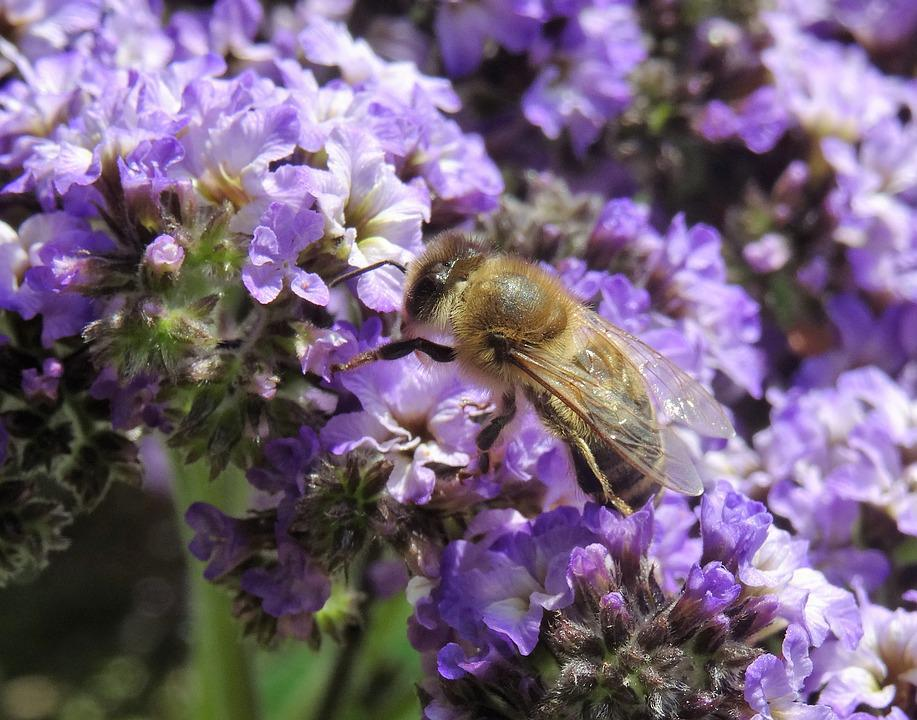Flower, Bee, Nature, Honey, Plant, Insect, Garden