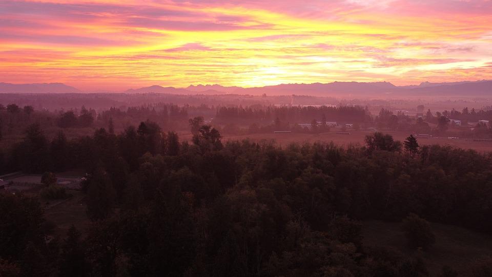 Forest, Sunrise, Sunset, Horizon, Nature, Landscape