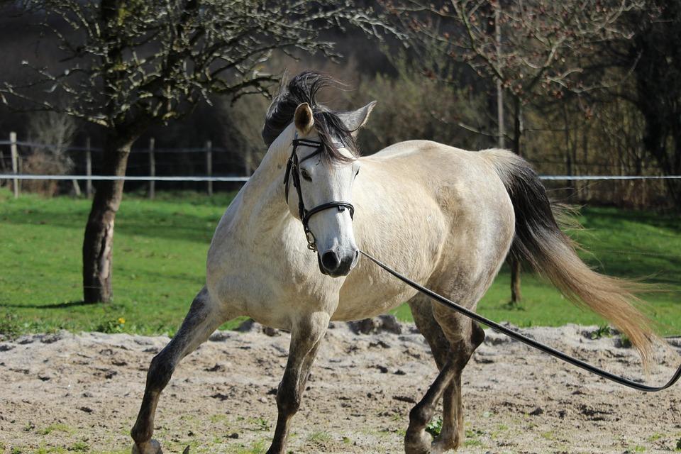 Arabian Horse, Horses, Horse, Nature, Equine, Animal