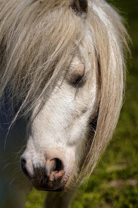 Horse, Horses, Nature, Animals, Pony