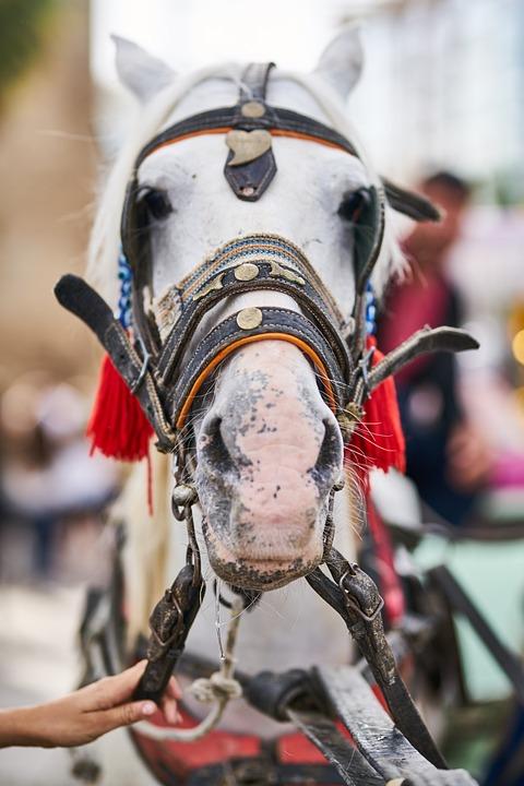 Horse, Portrait, Animal, Nature, Equestrian, Mammal