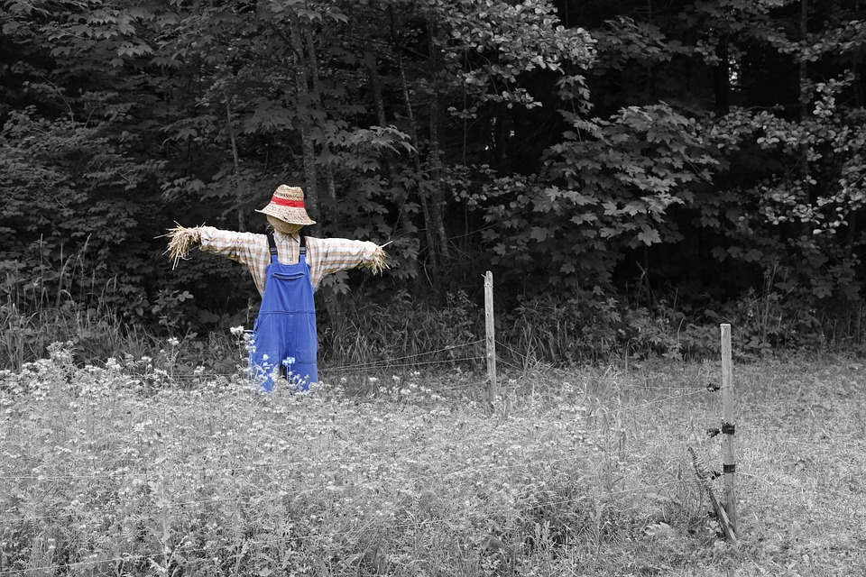 Scarecrow, Nature, Garden, Flowers, Plant, Horticulture