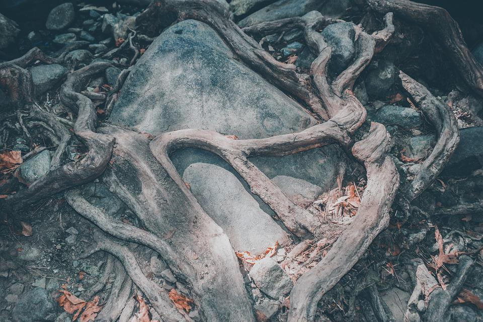 Roots, Rock, Dry, Tree, Nature, Wood, Opression, Hug