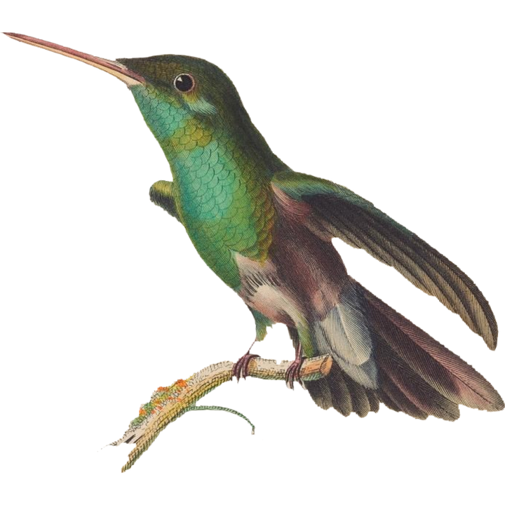 Bird, Hummingbird, Nature, Colorful, Feather, Wings