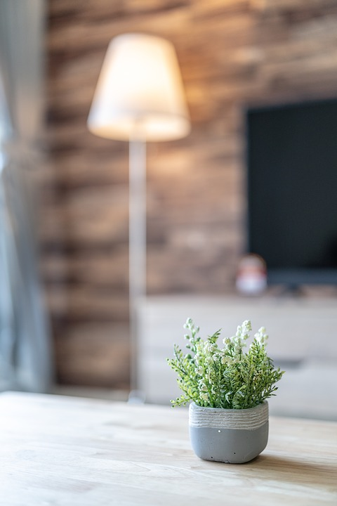 Plant, Indoor, Table, Green, Nature, Office, Flower