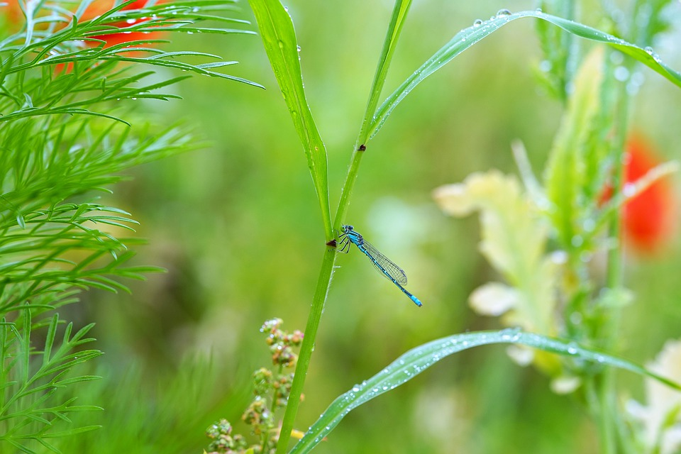 Dragonfly, Insect, Butterfly, Insects, Nature, Dew