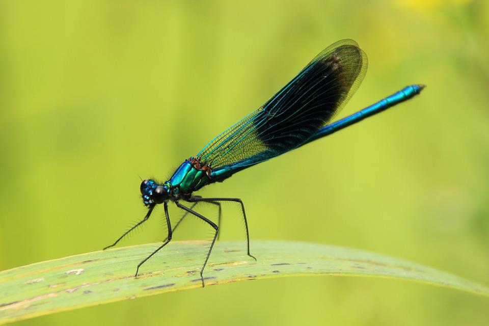 Dragonfly, Close, Insect, Nature, Green, Leaf, Animal