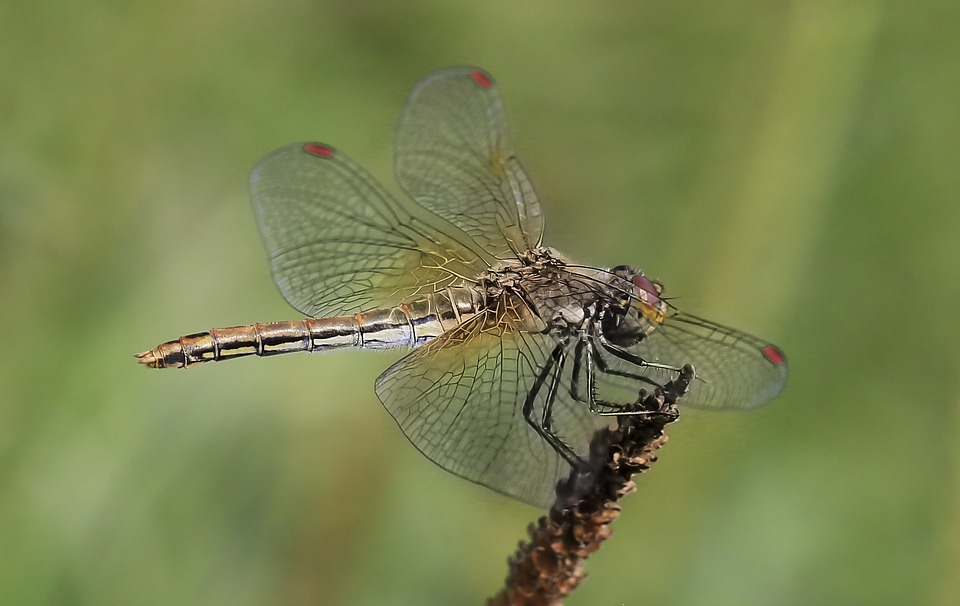 Dragonfly, Insect, Nature, Wing, Living Nature