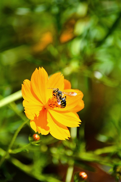 Flower, Bee, Insect, Pollen, Honey, Nature, Macro