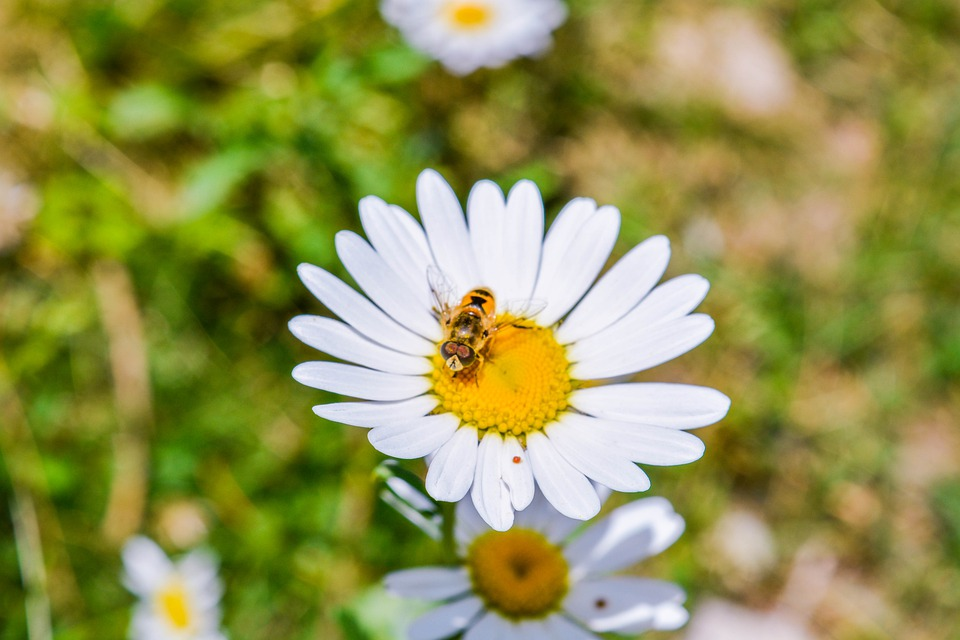 Bee, Grass, Nature, Flowers, Spring, Insect, Bloom