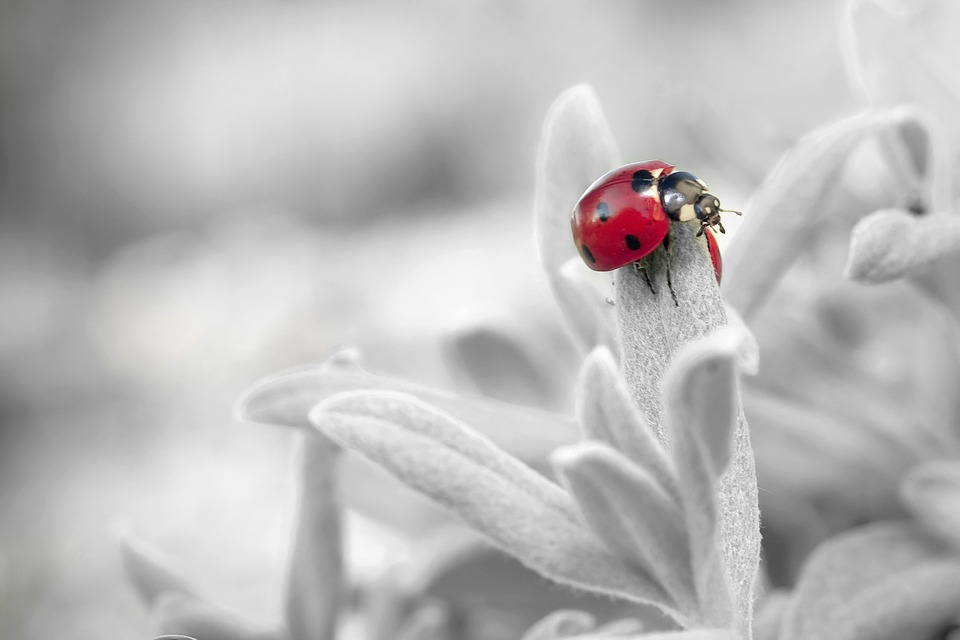 Ladybug, Insect, Nature