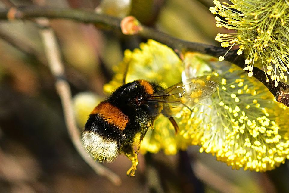 Nature, Garden, Hummel, Spring, Close Up, Insect