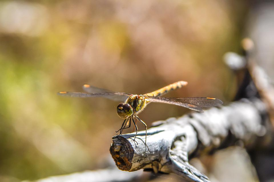 Dragonfly, Insect, Nature, Wing, Summer, Green, Animal