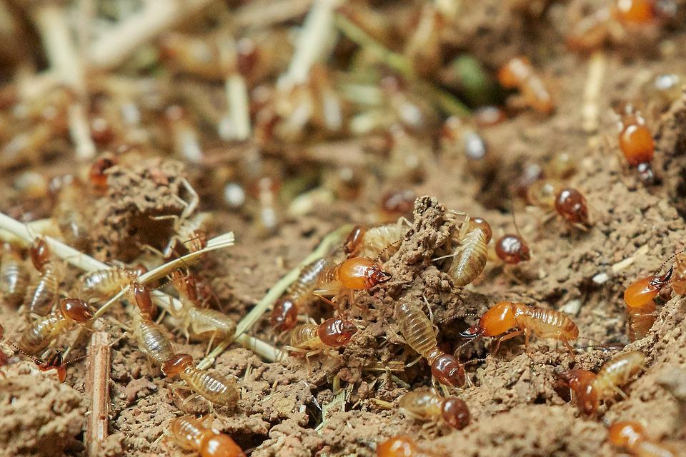 Termites, Nature, Food, Insect