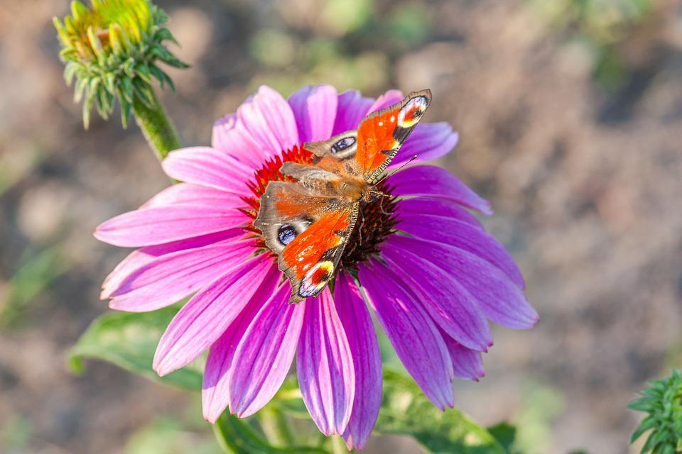 Violet Flower, Red Butterfly, Nature, Insect, Wings