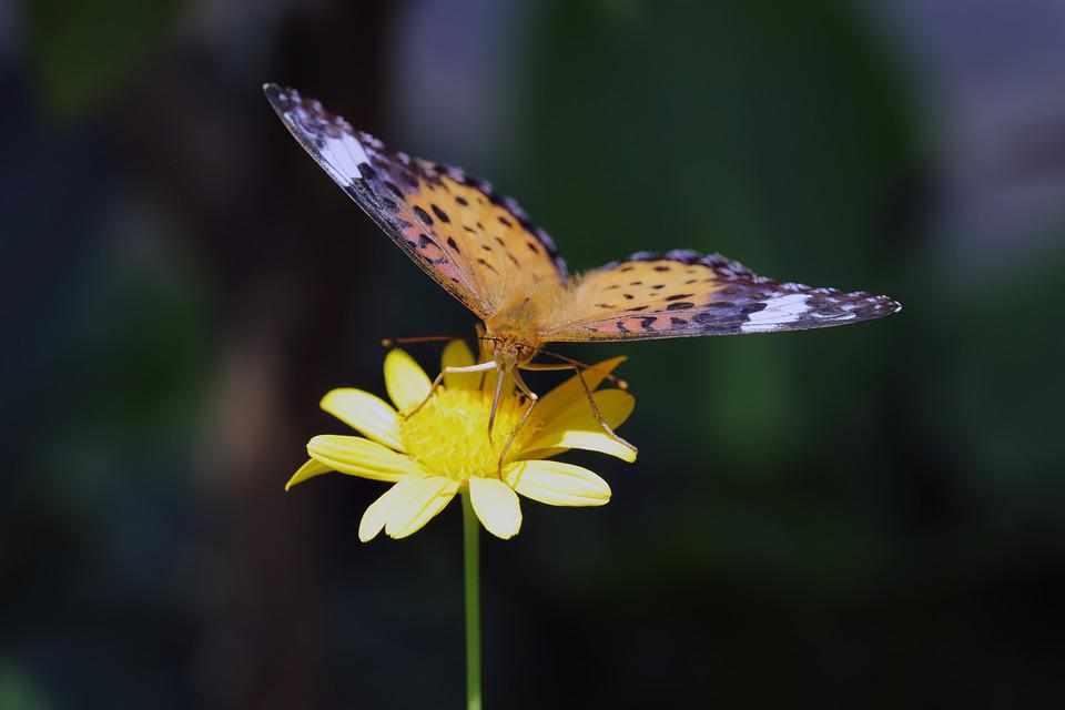 Butterfly, Insects, Nature, Animal, Wing, Flowers