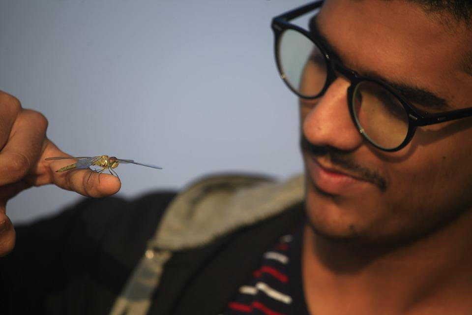 Dragonfly, Insects, Fauna, Animals, Nature, Odonata