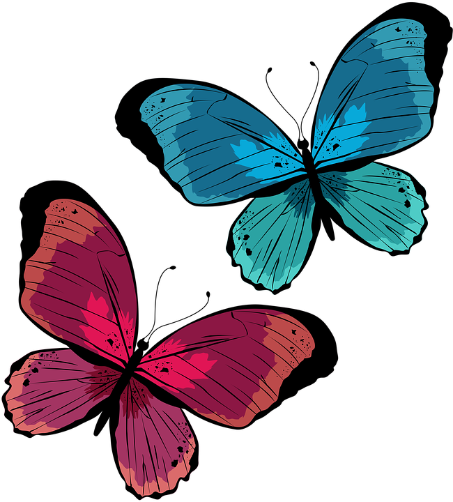 Butterfly, Insects, Animals, Nature, Wings, Colorful