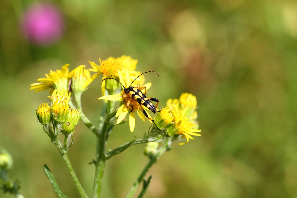 Insects, Nature, Flowers, Yellow, Macro Photo, Summer