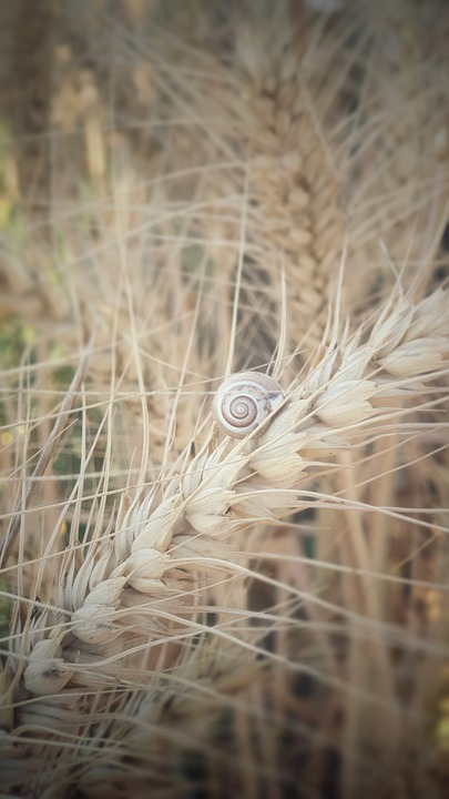 Israel, Nature, Snail, Land, Outdoor, Natural