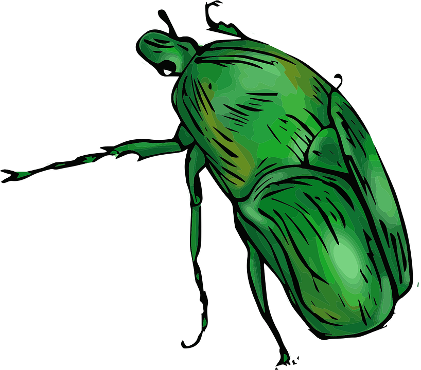 Green, Beetle, Jungle, Insect, Nature, Bug, Pest