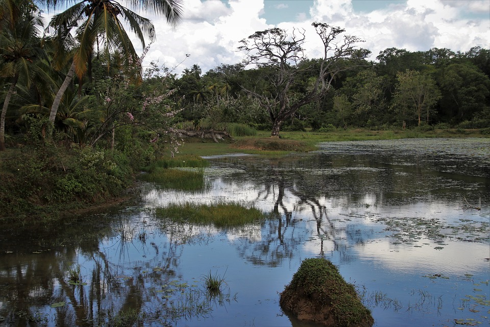 View, Exotic, Jungle, Nature, Tropical, Sri Lanka