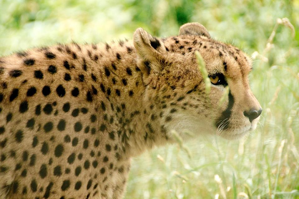 Africa, Kenya, Safari, Nature, Holiday, National Park